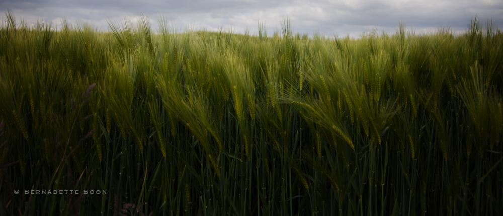 Groen in Limburg door Bernadette Boon